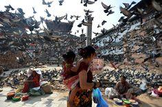 Week of May 22, 2015 A flock of pigeons takes flight as street vendors hawk their wares Wednesday in Durbar Square, Kathmandu, Nepal.     ISHARA S.KODIKARA/AGENCE FRANCE-PRESSE/GETTY IMAGES