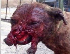 Petition · Give the Animals Rights! · Change.org   PLEASE SIGN TO SAVE THE ANIMALS AND PLEASE SHARE