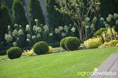 """Jak """"ożywić"""" mój szmaragdowy ogród - strona 1257 - Forum ogrodnicze - Ogrodowisko"""