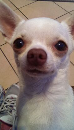 Join jamie on facebook.......jamie a little white chihuahua
