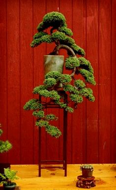 ☼֍Don't you love this cute #bonsai tree!♦♥       #BonsaiInspiration