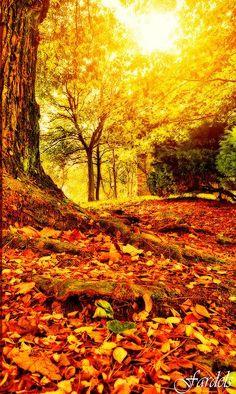 Autumn sunset https://www.facebook.com/pages/Trabajar-desde-casa-oriflame/875363985828347