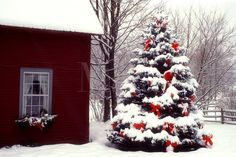~A heartwarming Christmas image of South Pomfret photographed by Andre Jenny~
