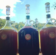 Mead (herbal honey wines) recipe development for our forthcoming Medicine Making Course. Damiana, Rose, ginger, cardamom on the left. Elderberry blackberry center stage. Sassafras meadowsweet on the right.