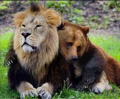 Who says a lion and a bear can't be friends? These unlikely animal friendships truly show that love knows no species.