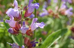 A greener garden for 2014: Top tips for growing organic flowers and plants » Greener Ideal