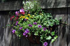 Summer, annuals, window, basket, planter, container, fence, urban, garden, landscape, design