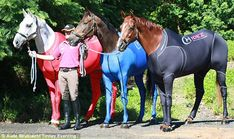 In striking red, blue and black, these horses look like superheroes champing at the bit to save the world.  They are, in fact, Olympic Games contenders trying out a new way to wind down after competing. Their suits, which zip up at the front and hind legs, are said to reduce muscle soreness and help horses recover after tough exercise. They also reduce the effect of vibration during travel.