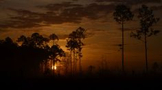 """The Okefenokee Swamp is the most extensive of Georgia's natural wonders in terms of area. This wildlife refuge in southeastern Georgia covers about 700 square miles and makes up part of four counties. The Okefenokee (from the Seminole, meaning """"land of trembling earth"""") includes a wide variety of ecological features, ranging from sandy ridges to wet, grassy savannahs and marshes to narrow water channels and small islands, all of which support a vast range of flora and fauna."""