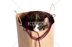 cat playing in bag of yarn - A cat playing inside a bag filled with yarn on a white background.