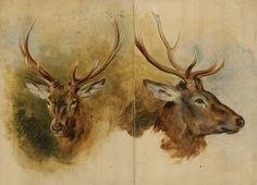 Landseer, Sir Edwin Henry (1802 - 1873), 'Two Studies of a Stag's Head' (WA1935.65)