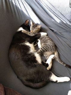 Got a kitten so my cat would have a buddy. Seems to be working out. http://ift.tt/2kgMtWr