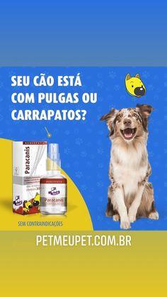 ✳️ VOCÊ SABIA❓É POSSÍVEL ACABAR COM PULGAS, CARRAPATOS E VERMES DE FORMA NATURAL E SAUDÁVEL. 🐶❤️👏 ⠀ ✅ 100% Homeopatia. ✅ Não Possui Contraindicações! ⠀ ✅ Saiba Mais: ⠀  ENTRE EM CONTATO E CONHEÇA TODA LINHA DE HOMEOPÁTICOS PARA SEU PET. ✅(11)956003536 - whatsapp ⠀ #cachorro #filhode4patas #petmeupet #homeopet #homeopatiaparacachorro #maedecachorro #paidecachorro #petshop
