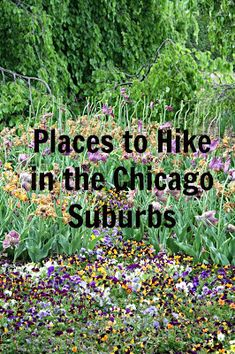 Forest preserves in the Chicago suburbs