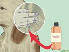 How to Make a Natural Flea and Tick Remedy with Apple Cider Vinegar. Pet owners have discovered that apple cider vinegar makes an alternative flea and tick repellent. The acidic taste is unappealing to fleas and ticks, so regularly. Flea Remedies, Ticks Remedies, Natural Remedies, Health Remedies, Diy Dog Shampoo, Flea Shampoo, Dog Flea Treatment, Flea Spray, Dog Steps