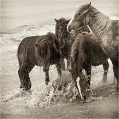 Splash horses by Deb Garside ©