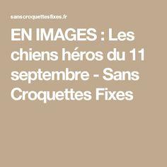 EN IMAGES : Les chiens héros du 11 septembre - Sans Croquettes Fixes