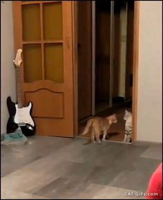 """Animated CAT GIF • Crazy Cat jumps suddenly for no apparent reason. Wait Bro, you Mad?"""""""