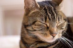 Sleepy Kitty #cats #catphotography