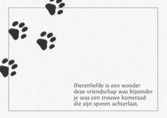 spreuken dierenliefde 110 beste afbeeldingen van Spreuken hond   Animal quotes, Cats en  spreuken dierenliefde