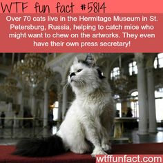 Cats in the Hermitage Museum, Russia. - with their OWN Press Secretary!  ...Now that's a fun fact!  ~WTF fun facts