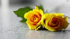 Yellow Flowers Wallpapers HD Pictures | One HD Wallpaper Pictures ...