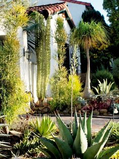 Maximalist garden features a variety of architectural and sculptural plants placed in close proximity for a layered and unique design.