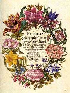 ботаническая живопись,старинные принты. Обсуждение на LiveInternet - Российский Сервис Онлайн-Дневников