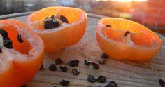 Capsicum Pubescens cv. CAP 867 Orange