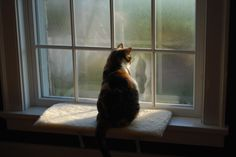 looking out beautiful windows - Google Search