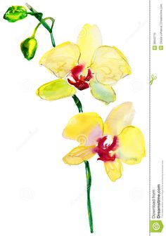 orchid watercolor yellow - Google Search
