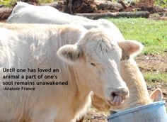 """""""Until one has loved an animal a part of one's soul remains unawakened"""" - Anatole France"""