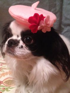 Pink Flowered Beret Dog Hat Valentine's Day Various by Doginafez  Fancy a French beret for your sweetheart?