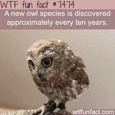 WTF fun facts is a blog for interesting