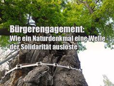 In einem kleinen Dorf in Ostthüringen haben Bürger in den vergangenen drei Wochen eine Welle der medialen, digitalen und analogen Aufmerksamkeit losgetreten - zur Rettung eines uralten Baumes, der laut eines Gutachtens die Verkehrssicherheit gefährde.