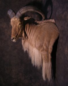 Click this image to show the full-size version. Taxidermy Decor, Taxidermy Display, Deer Mounts, Trophy Hunting, Trophy Rooms, Colored Pencil Techniques, Celebrity Drawings, Horse Drawings, African Animals