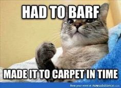 Cats are simply the funniest and most hilarious pets, they make us laugh all the time! Just look how all these cats & kittens play, fail, get along with Funny Cat Memes, Funny Cute, Hilarious, Funny Humor, Funny Pics, Funny Stuff, Funny Animal Pictures, Funny Animals, Dog Cat
