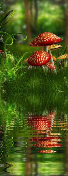 Beautiful fairy forest reflection   HoHo Pics