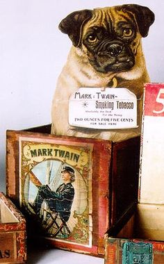 "From UVA's Twain archives: ""The 'pug' dog sitting in the middle box was a ""counter card"" that sat on a drugstore counter to advertise Mark Twain Tobacco. His back legs were hinged to allow him to ""stay"" all day on the counter."""