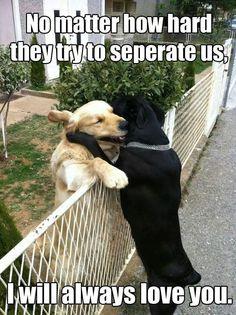 I always love you. Dog