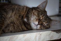 Morphée endormie
