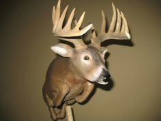 Maple/ whitetail deer
