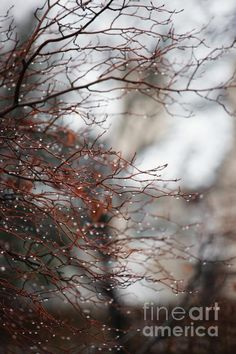 Wintry Mix (c) Linda Knorr Shafer - LKSphotography