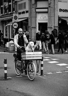 man, beard, bike and staffie (via Jarek Kozlowski) Tricycle, Biking With Dog, Black And White Dog, English Bull Terriers, Bicycle Maintenance, Cool Bike Accessories, Dog Art, Mans Best Friend, Touring