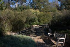 Walcott's garden in Canberra Australian Garden Design, Australian Native Garden, Native Gardens, Native Australians, Native Plants, Conservation, Habitats, Landscape Design, Sustainability