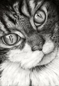 Cat Drawing by ~Vinnie14 on deviantART. Amazing.