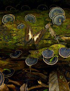 butterfly among moss & fungi...