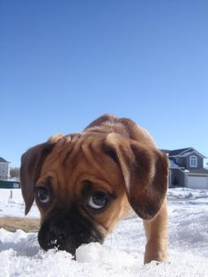 Who doesn't like puggles?! Their so cute #cutedogday