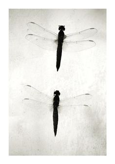 Insect art - Black and White photography - Underwater words 1 - Fine art photography print - Fauna - 6,7 x 10