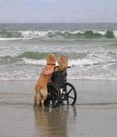 Beautiful Love>>> See it. Believe it. Do it. Watch thousands of spinal cord injury videos at SPINALpedia.com